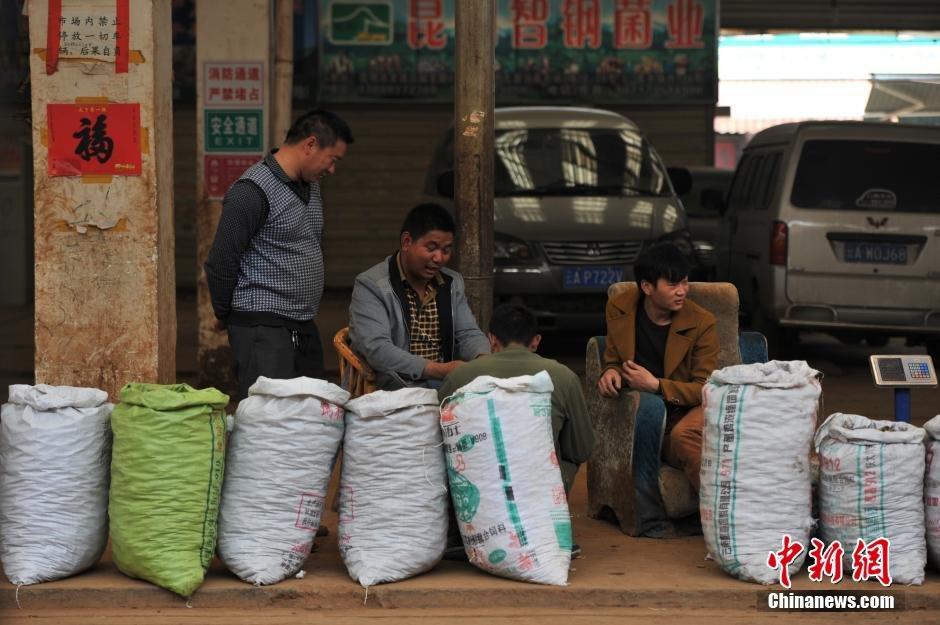 2月23日,昆明木水花野生菌交易市场里,玛卡商贩聚在一起打牌。