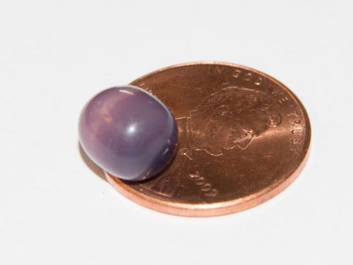 美国女子15美元购买蛤蜊 吃出价值数千美元珍珠