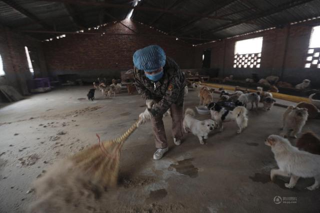 陕西渭南老人除夕夜不回家 喂1300余只流浪狗