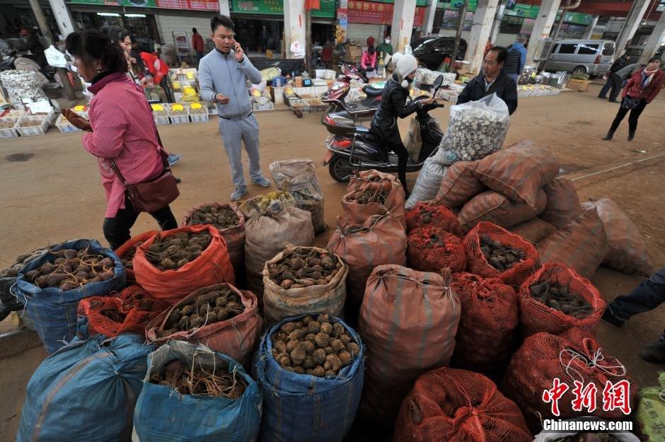 2月23日,昆明木水花野生菌交易市场里,一袋袋玛卡等待出售