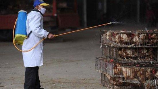 全国确诊H7N9禽流感102例 死亡20人康复12人