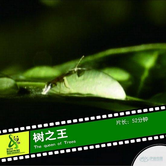 2011雅安电影节国际参展影片《树之王》