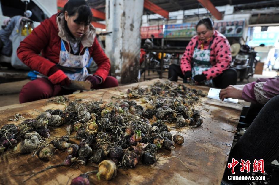 2月23日,昆明木水花野生菌交易市场里,玛卡商贩制作玛卡干片。在过去数年内,玛卡曾经一度疯狂,优质的玛卡干片价格上万,鲜果价格也冲过百元。如今玛卡鲜果每公斤只要7至10元就可以买到。这和去年3月中旬每公斤100多元的鲜果价格相比,跌幅近9成。 中新社记者 任东 摄