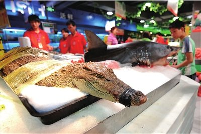 北京超市出售活鳄鱼和鲨鱼 市民称太残忍(图)