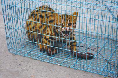 村民用捕兽夹捕获豹猫当街叫卖 被森林公安收缴
