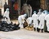 我国出现禽流感感染病例