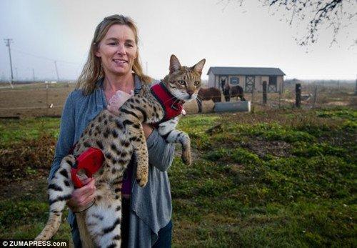 世界最高的猫:高48厘米 - calculus - 徐小湛的博客