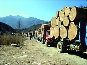 媒体:中缅系友好国家 因伐木获重刑举世罕见