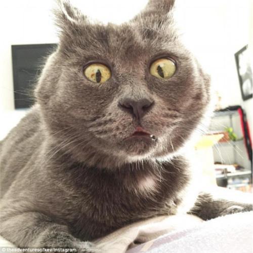 小猫患脑积水反成网红 吃惊表情别具一格