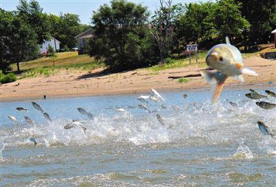 回音壁:庆十一 美国人喊你去吃鱼