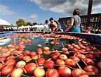 希尔顿镇的苹果节