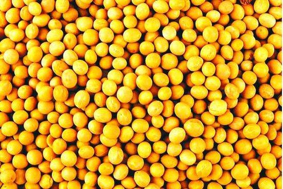 农业部批准发放三个转基因大豆进口安全证书