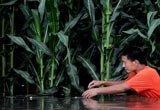 一位村民行走在被淹没的田中