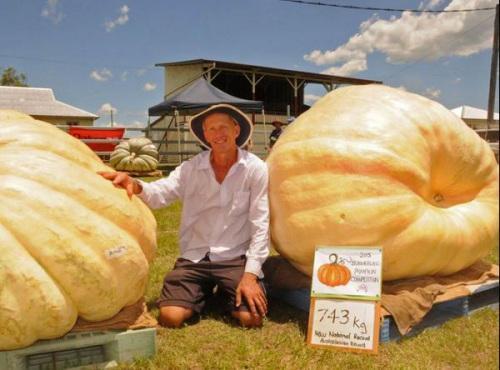 农夫种出753公斤重南瓜 打破澳大利亚纪录