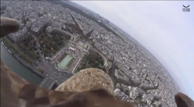 正宗鸟瞰:老鹰背上架摄像机航拍巴黎