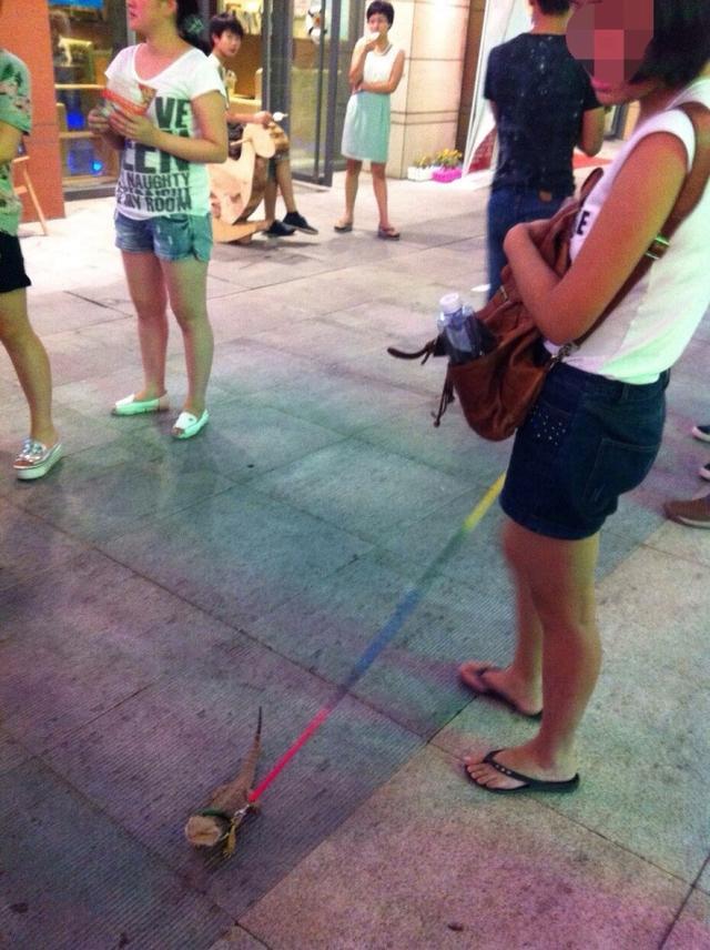 郑州女子街头遛蜥蜴引围观 秒杀周边宠物狗(图)