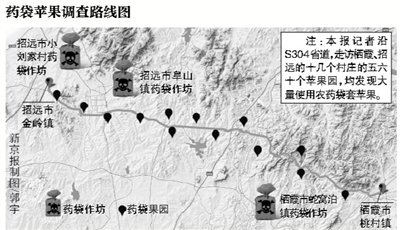 烟台苹果主产区红富士套违禁药袋长大(组图)
