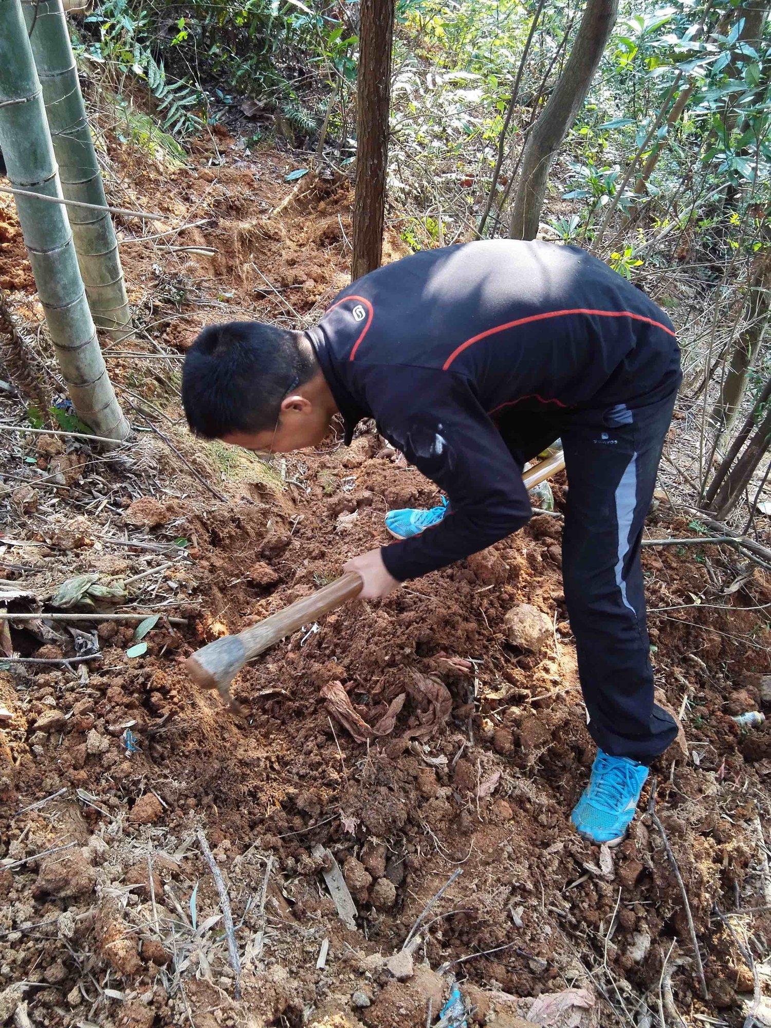 我在挖冬笋