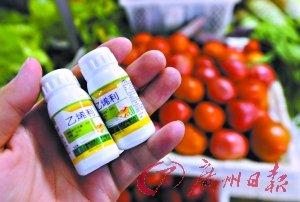 """蔬菜滥用催熟剂现象值得关注。这是记者在合肥农资市场买到的""""乙烯利""""植物生长调节剂(7月17日摄)。新华社 发"""