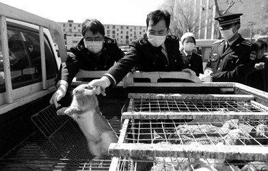 北京防控H7N9形势不容忽视 不排除华东病例入京