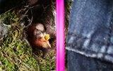 女生裤子晾阳台 鸟儿飞来做窝下了4个蛋还孵出了小鸟