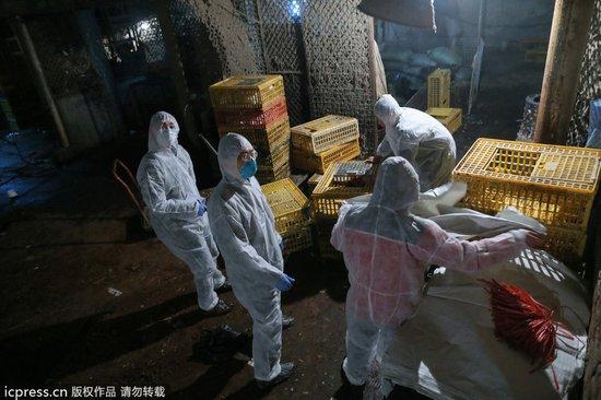 6日起,上海将暂时停止活禽交易,并关闭活禽市场。