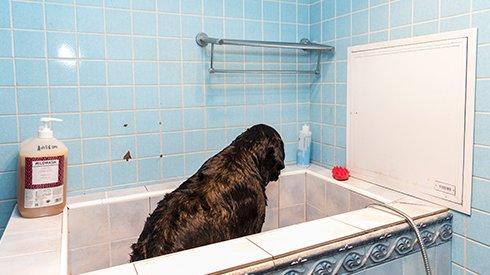 如何讲好狗的故事?他们说不如写写人的孤独