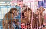 妻子举报丈夫养小三 结果查获一群猴