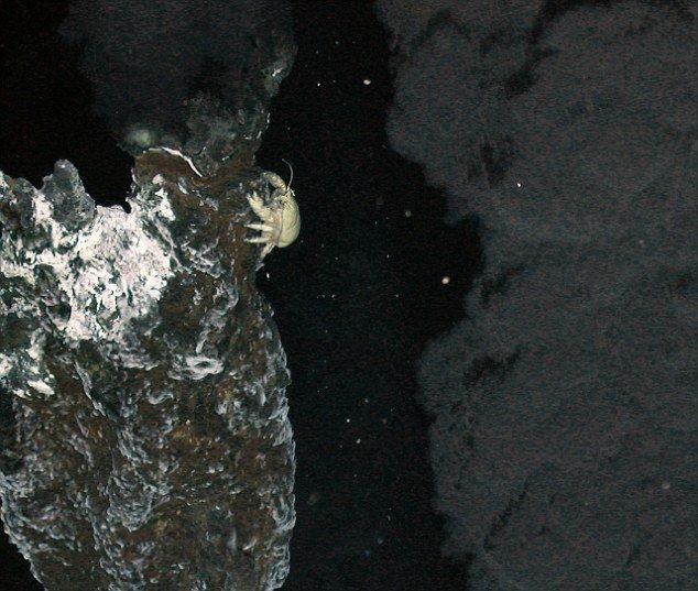 """◆科学家发现◆南极深处""""消失的世界""""--组图 - qinzhencsl - 月夜下的田园-海内存知己,天涯若比邻"""