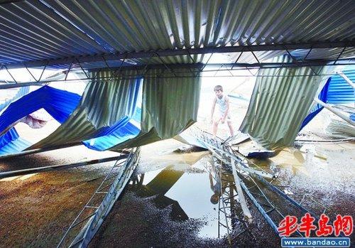 12级龙卷风袭青岛 吹倒大树砸塌民宅(组图)