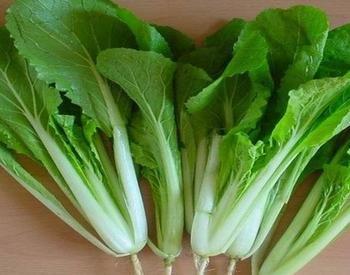 夏、秋小白菜施用有机肥种植方法