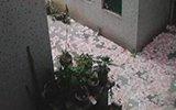 广州一男子清晨坠亡 身旁洒落数十万现金