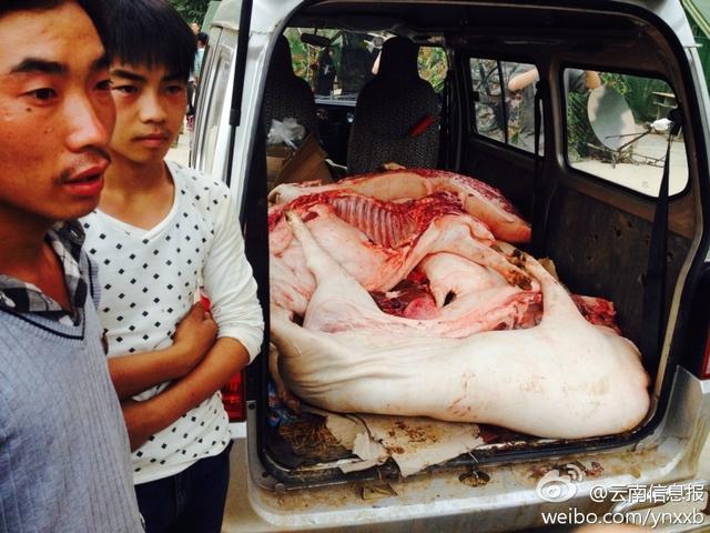 震区村民宰杀活猪赠予救援部队_新闻_腾讯网