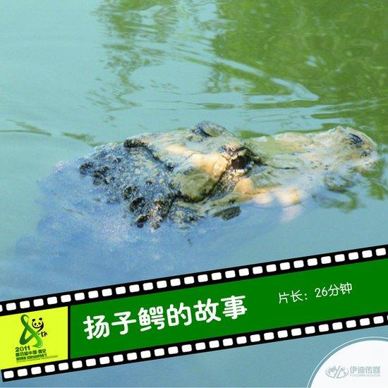 2011雅安电影节国内参展影片《扬子鳄的故事》