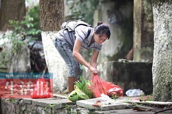 社会资讯_社会资讯速递 广西药用植物园梅花鹿暴瘦 网友展开营救