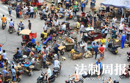 6月20日,玉林的活犬交易市场非常热闹