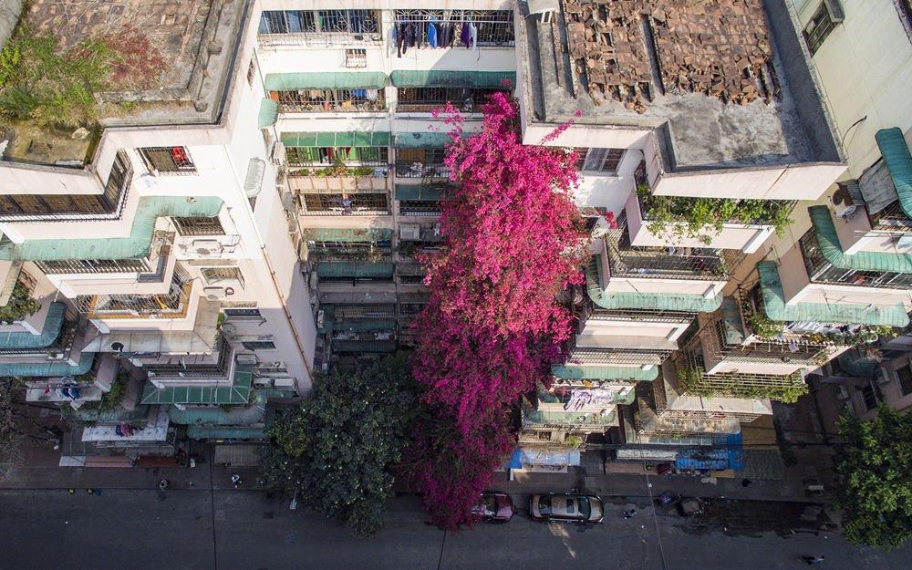 """20岁�{杜鹃攀爬九层居民楼 花朵齐数绽放恍如红色""""瀑布"""""""
