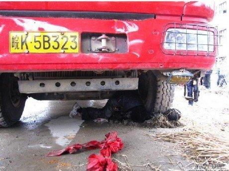 浙江乐清一村长遭撞死 传被5人按住由车碾压