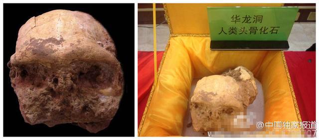 中国科学家发现新猿人头骨化石