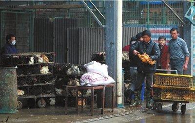 上海接触H7N9死者后发热患者未被感染 正在恢复