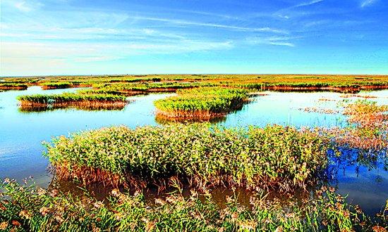 辽河三角洲:湿地大苇荡