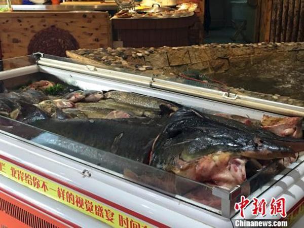"""哈尔滨""""天价鱼""""店家承认服务员代签账单_新闻_腾讯网"""
