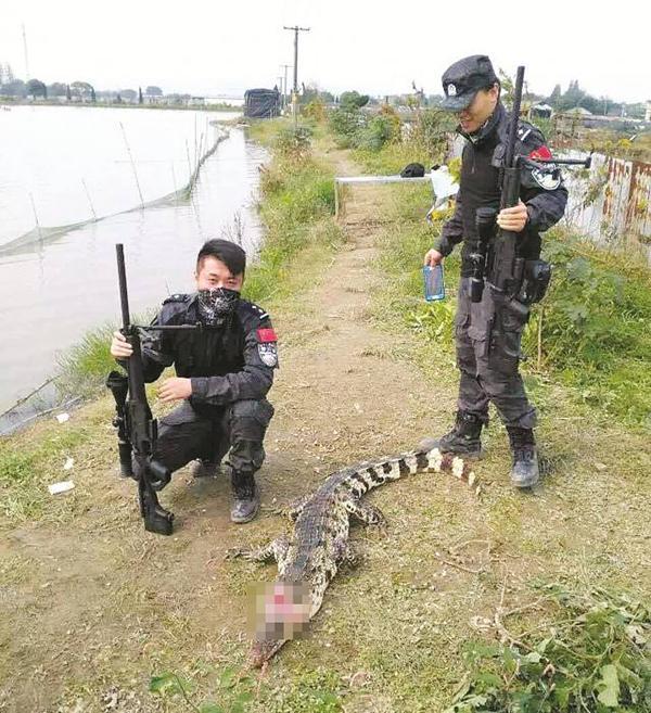 国产新型警用狙击步枪的首个公开战果——一条鳄鱼