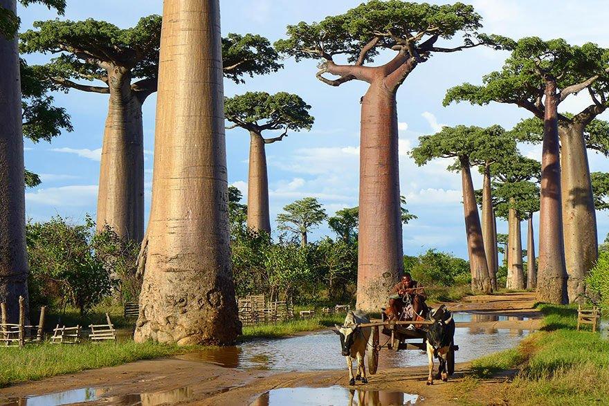 世界各地美得令人窒息的树木 - 兰绿相间  - 兰绿相间