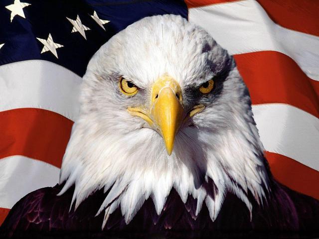美国男人的鸟_美国鸟会反恐?丹麦引进美国国鸟应对无人机袭击