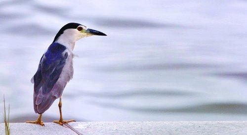 山东大片湿地开发建楼 迁徙候鸟无处过冬(图)