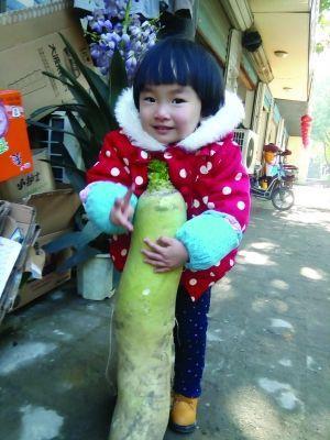"""南京农户获""""巨无霸""""萝卜 重13斤高半米多(图)"""