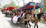 维吾尔族婚礼真拉风 14辆马车载娇美新娘