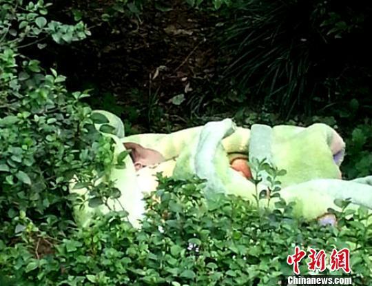四川宜宾街头绿化带丛中现遗弃死婴警方正在调查