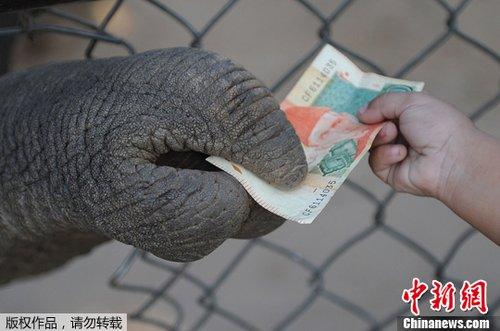 巴基斯坦大象鼻子卷走钱币毫不客气图片